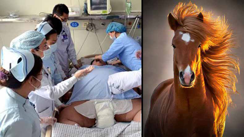 This man is hung like a horse! Bizarre penis transplant