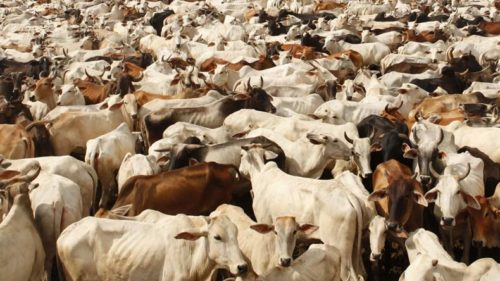 Minority community, Dalits protest against new notification of cow slaughter