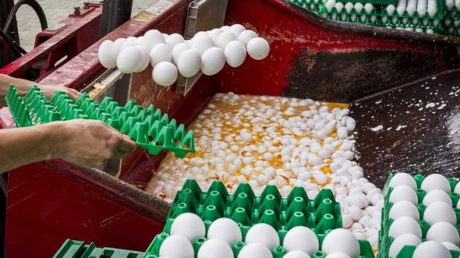 Eggs containing pesticides found in 17 countries