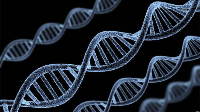 Genes causing intellectual disabilities identified