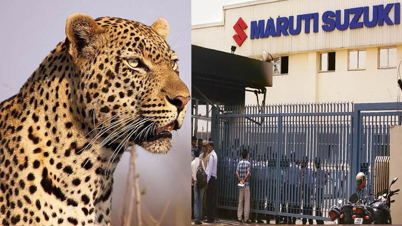 Search underway for leopard on the loose in Indian auto  factory