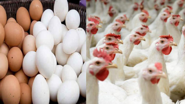 Egg-pocalypse is here! Pricy eggs lose ground to cheaper chicken