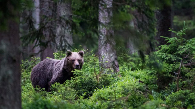UN Environment warns Poaching threatens Europe's last pristine forests