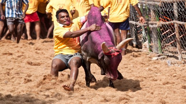 Jallikattu claims one life during Pongal Celebrations