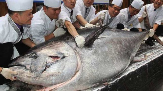 Bluefin tuna sold for $320000 in 1st Tsukiji sale of '18