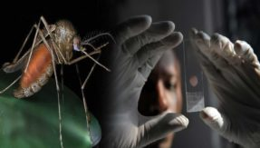 New malaria drug found effective in human trial