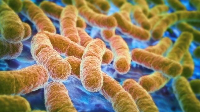 Scientists identify bacteria that boosts athletic performance