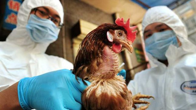 The-infection-spreads-through-contact-with-live,-infected-poultry,-especially-in-rural-areas.