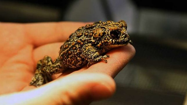 US biologists discover three new toad species in Nevada's Great Basin