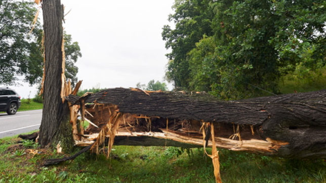 Poland: Thunderstorms destroy 30,000 hectares of forests