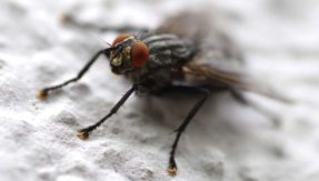 Houseflies could carry hundreds of harmful bacteria: Research
