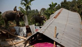 Ban use of captive elephants for demolition: Animal activist