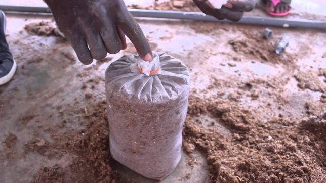 Tech meets Innovation: 2 Patna Brothers start mushroom farming after watching a YouTube tutorial