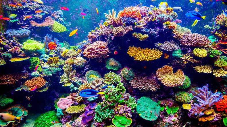 Coral reefs, Anthozoa, Physical geography, Coral, Plastic pollution, Sea, Physical oceanography, Open brain coral, Australia, James Cook University, Cornell University in New York, Cornell University, Thailand, plastics, Joleah Lamb, Indonesia, Bette Willis, James, world news, environment news