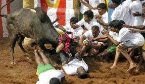 Jallikattu: 3 die, 50 injured during bull taming in different parts of Tamil Nadu