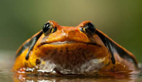 World Wildlife Fund inaugurates frog exhibition in Delhi