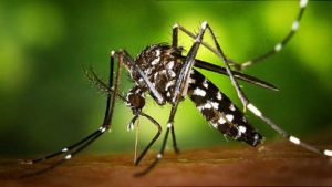 Zika virus, Hepatitis C, Health news, Health and environment use, New York news, Research, World news, IANS news