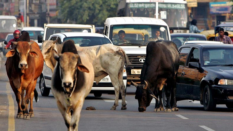 Image result for Tackle strays, tweet residents in selfies with cows