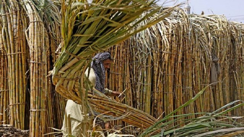 Sugar crisis: With Lok Sabha polls in mind, Centre to announce Rs 8,000 package for cane farmers