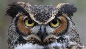 Guided by YouTube tutorial, married Delhi man kills owl for black magic to attract woman