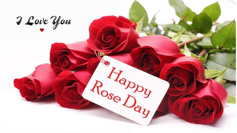 Happy Rose Day 2019: WhatsApp Stickers, Animated Gif, HD pictures, wallpapers to wish Happy Rose Day to Girlfriend, Boyfriend, husband and Wife
